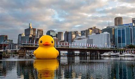 黃色小鴨來台悠游,你看過了沒?