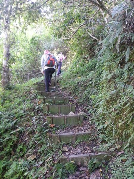 E蓮花池登山步道Z型山路