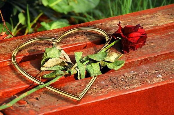 rose-333196_640