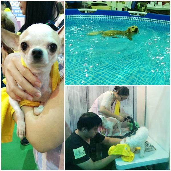2014台北寵物展6