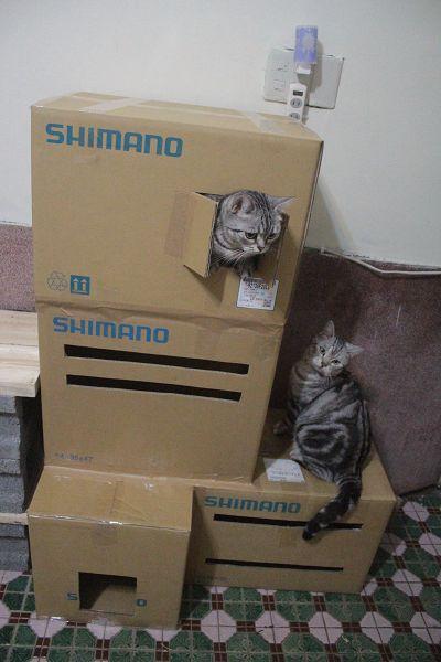 紙箱-011-1