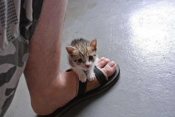 奶貓訓練班-林學凱
