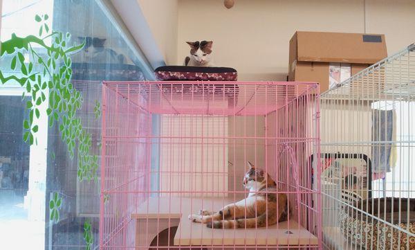 貓咪相處-002