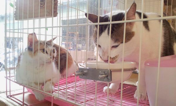 貓咪相處-004