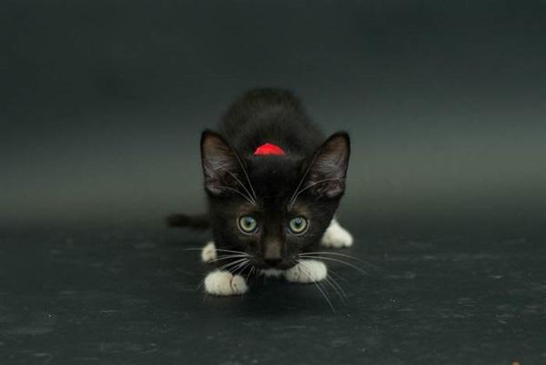 black_cat_6.jpg
