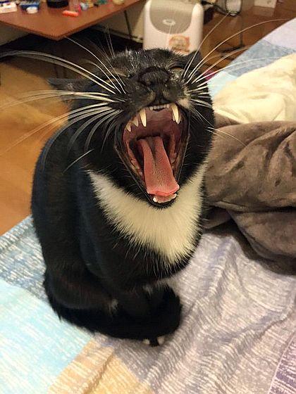 牙齒保健-Verna Hsu 刷牙