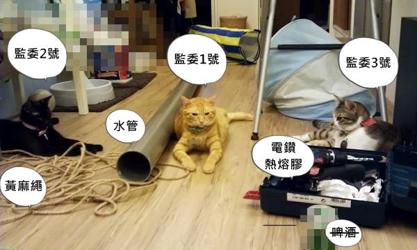 貓咪天空樹準備材料