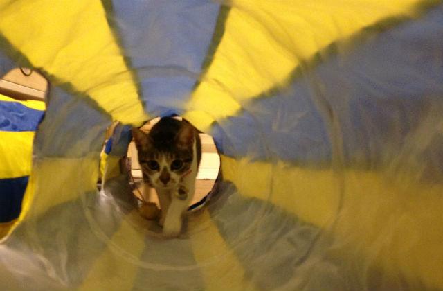 墨條在貓隧道裡