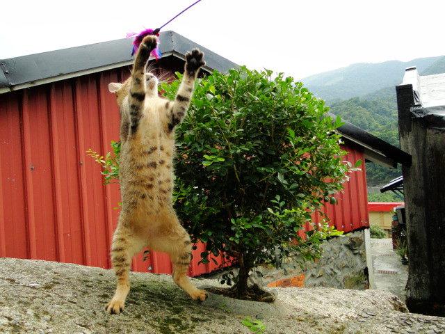 猴硐貓咪玩逗貓棒