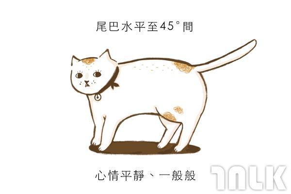 Cat單圖02.jpg