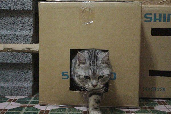 紙箱-011-3