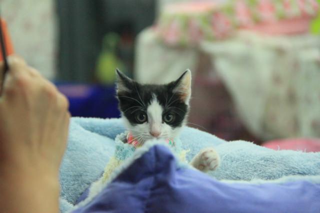 認養活動中的小貓咪