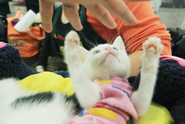 認養活動中小貓