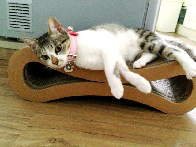墨條在貓抓板上