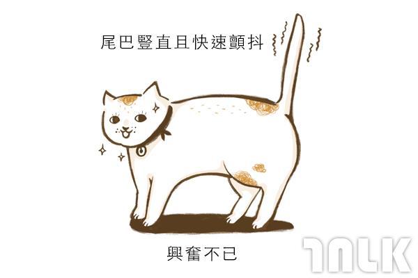 Cat單圖04.jpg