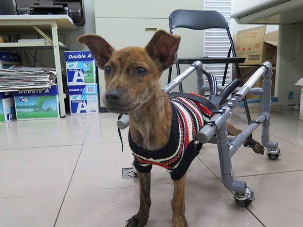 新聞稿-輪椅狗2
