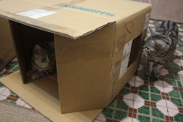紙箱-006