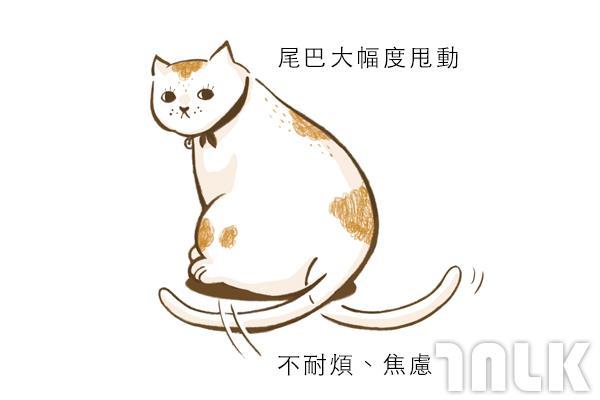 Cat單圖06.jpg