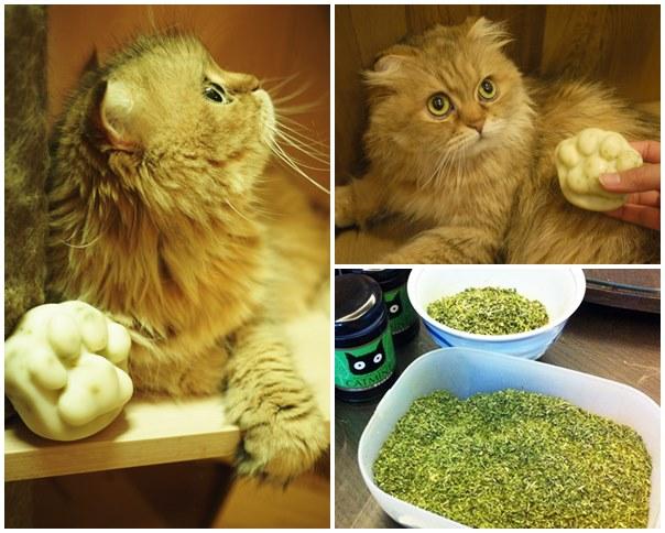 貓掌皂008