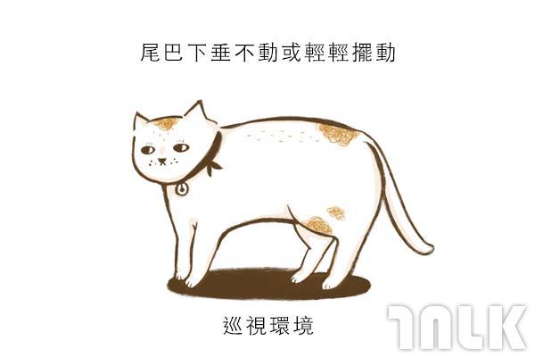 Cat單圖08.jpg