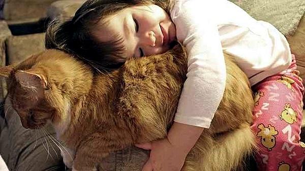 貓咪抱枕.jpg