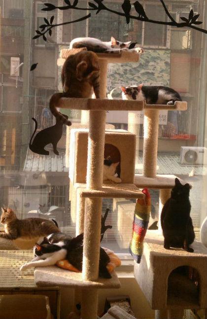 發條貓貓旅館(北)