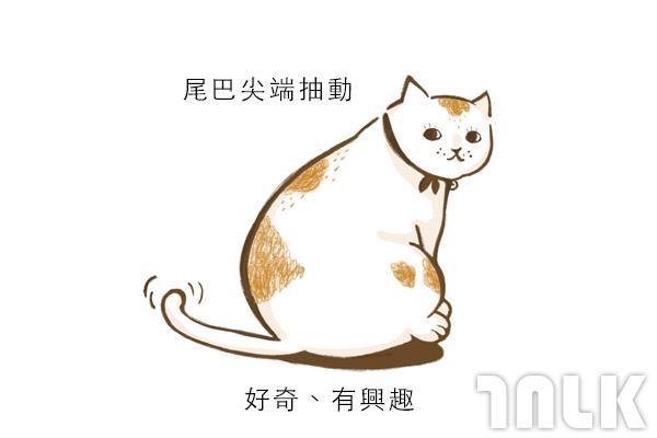 Cat單圖09.jpg