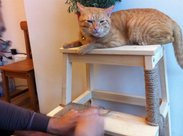 DIY 貓玩具 貓抓板