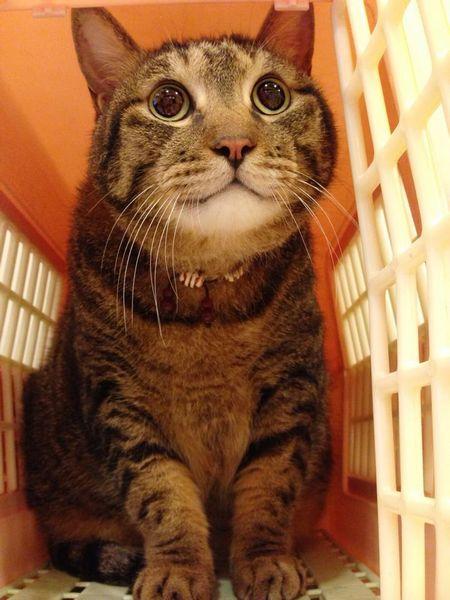 老貓這樣顧- 斑斑