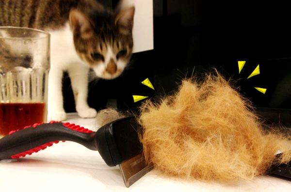 不銹鋼毛梳-小虎的毛