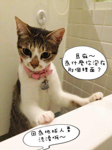 讀喵術下004