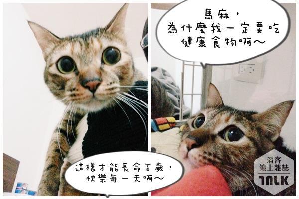 蔡蔡01.jpg