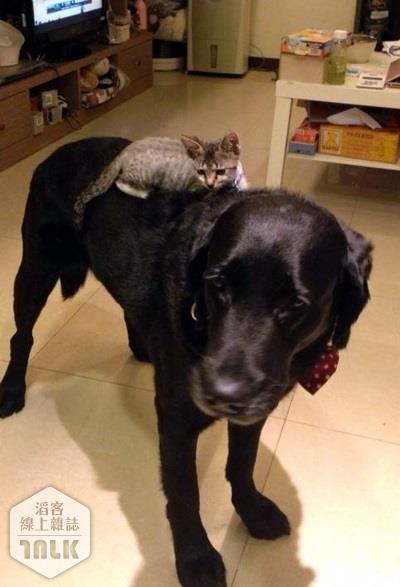 猫跟狗可以一块养吗?