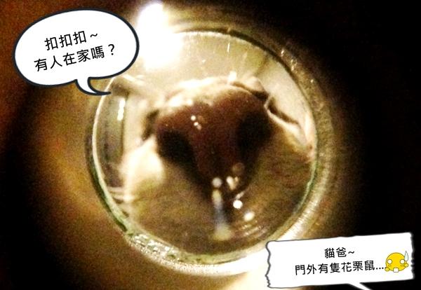07 花栗鼠