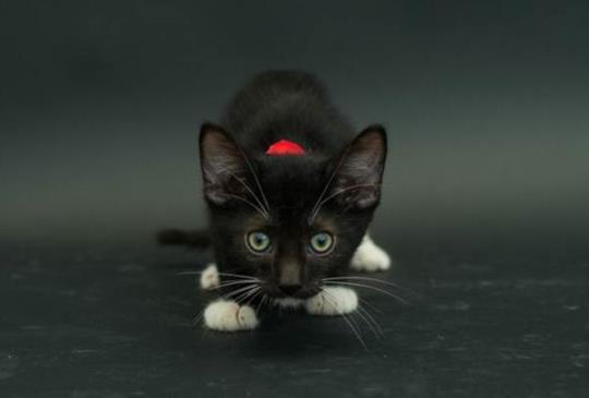 【黑貓才是王道】7個擁有過黑貓才知道的好