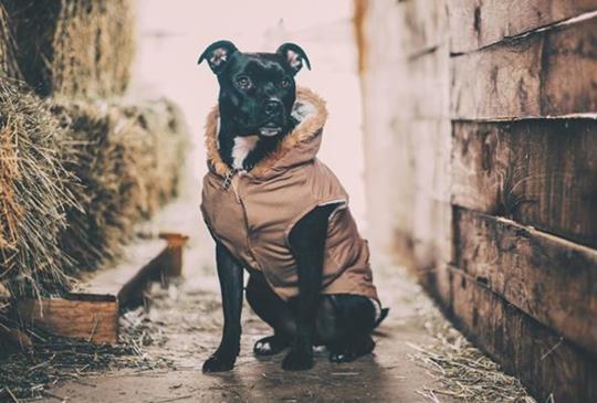 中獸醫師談寵物常見氣虛體質:老犬貓、病癒術後、食慾不振