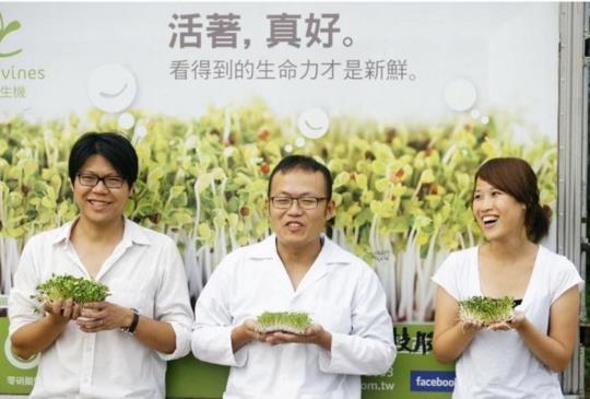 「產品、內容、SEO」金三角   綠藤生機營收五倍成長!