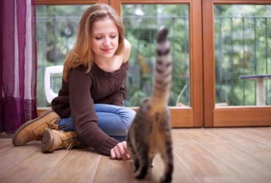 【讓喵星人愛上你】訓練師教你如何當個「貓咪磁鐵」!