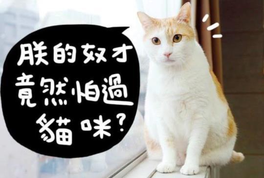 別再相信不實的傳言,貓咪其實很可愛。(黃阿瑪:朕的奴才從前竟然也怕貓?太沒用了!)