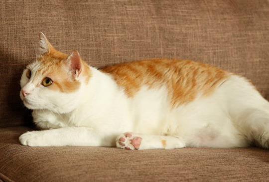 貓咪走失最重要的3件事,協尋文又該怎麼寫才有效?