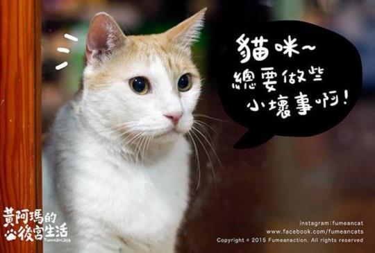 貓咪愛做的小壞事!你家的貓咪也會這樣嗎?