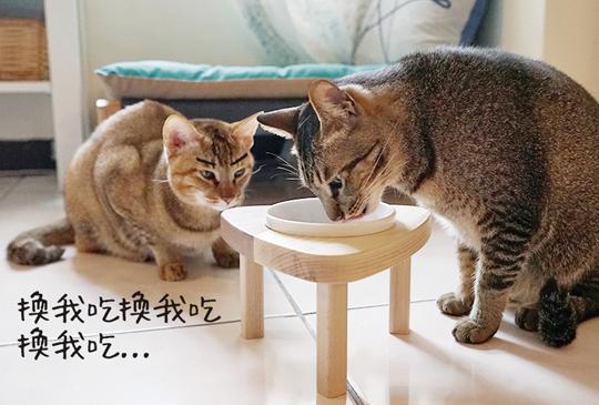 【貓の健康】木頭溫潤質感.我的幸福日和貓餐桌