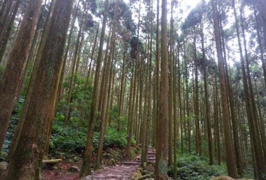 緩緩生活行!慢食、慢活【關西】馬武督探索森林