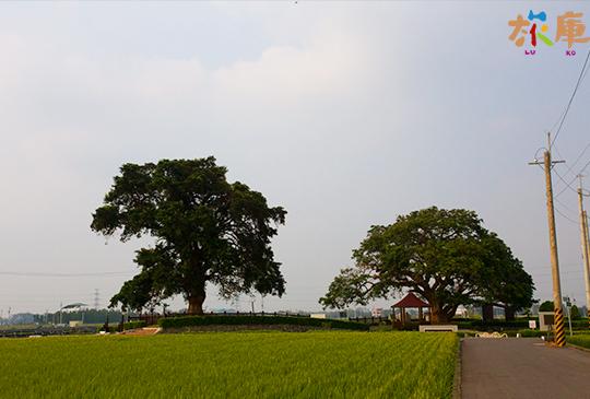 田中夫妻樹(老樹公園)│田中鎮