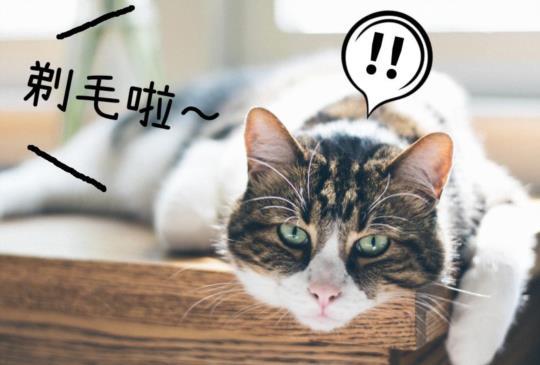【我的貓咪該剃毛嗎?】貓咪剃毛不知不可 & 超厲害電剪推薦