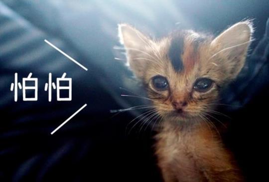 【動物行為專家教你】幫助膽小貓更親人的9個小技巧