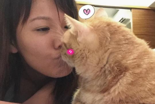 【讀喵術】搞懂貓咪到底在「喵~」什麼!(上)