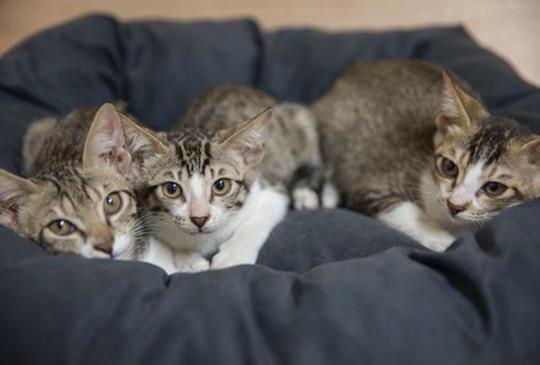 【好書推薦】貓奴必備的全方位家庭醫學百科
