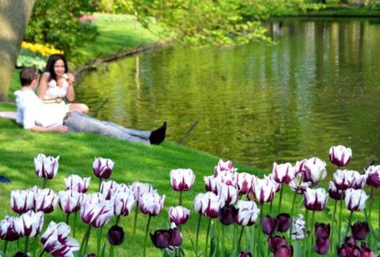 春遊荷蘭不可錯過的五大節慶