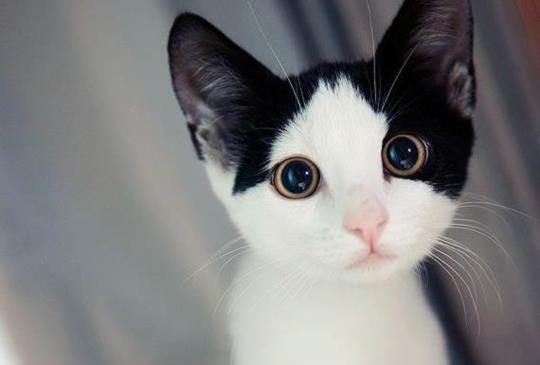 【維基解咪】關於貓咪鼻子的8大秘密!
